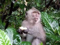 monkey-garden